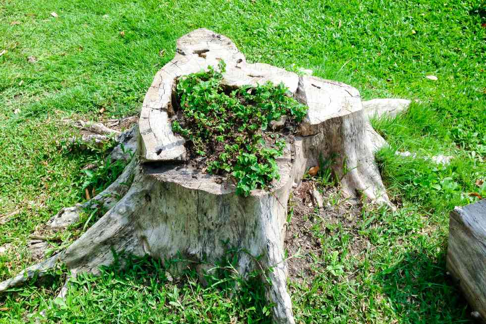 Tree Service Topeka KS - Stump removal