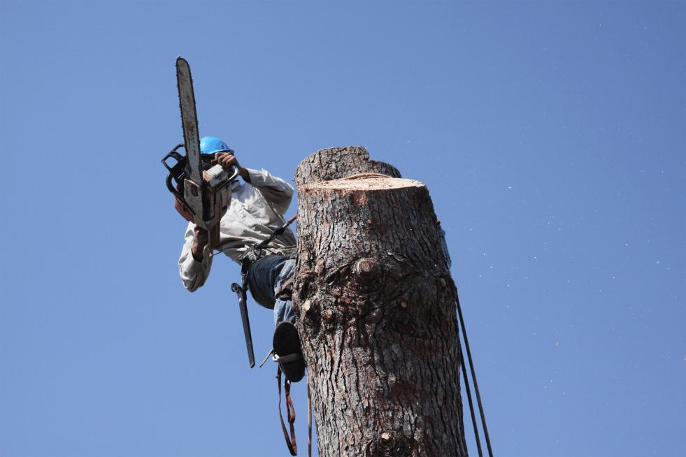 Tree Service Topeka Kansas - Removing a big tree