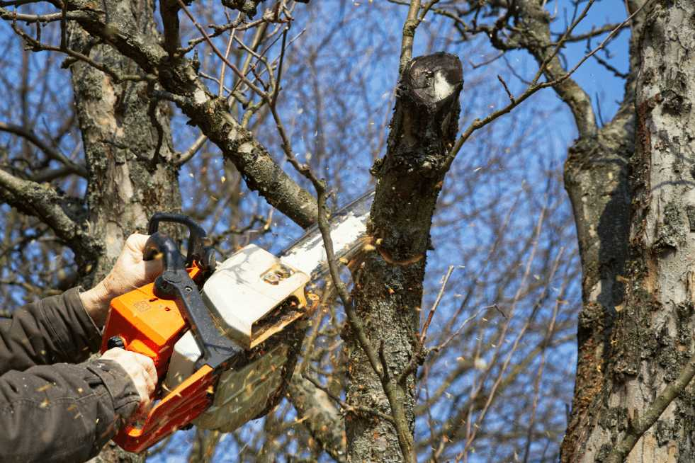 Tree Service Topeka KS - Cutting branches from a tree