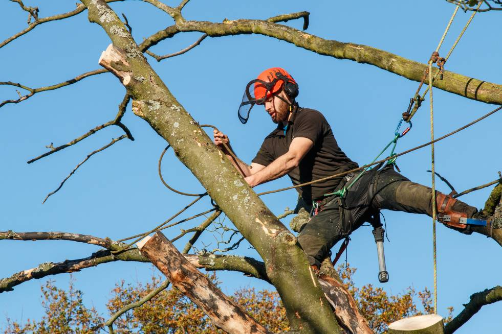 Tree Service Topeka KS - Arborist climbing in tree to cut branches